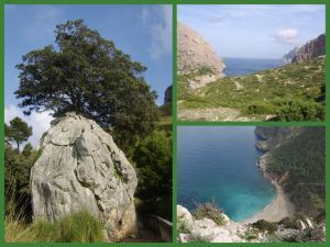 Collage Mallorca